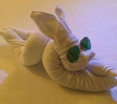 The rabbit in Bipashu Basu's bed. Maldives, Dinosaur Stuffed Animal, Rabbit, Towel, Bed, Animals, The Maldives, Bunny, Rabbits