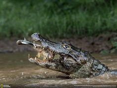 "2º lugar: ""Double Trapping"". Massimiliano Bencivenni em Rio Negrinho, Mato Grosso, Brasil."
