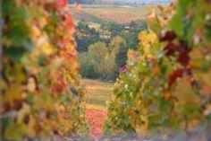 Couleurs automnales - Photographies Patrick Jassiones Champagne, Fruit, Vineyard, Photographs, Landscapes, Colors, The Fruit