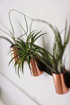 DIY: minimalistische luchtplanten met een koperen accent   roomed.nl