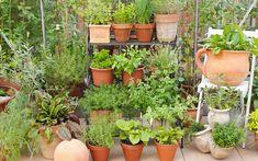 container-garden-terracotta-pots-herb-garden