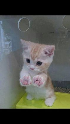 Why you keep me in here? (Source:... - Cute Animals