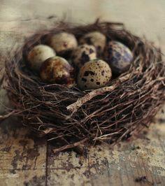 . Speckled Eggs, Egg Nest, Love Birds, Beautiful Birds, Bird Houses, Bird Feathers, Beltane, Bird Nests, Quail Eggs