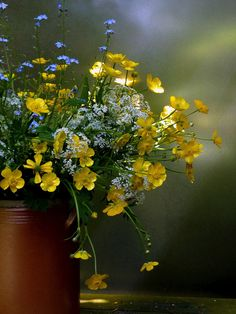 Coreopsis ♥ bouquet of flowers from the garden ♥ My Flower, Wild Flowers, Beautiful Flowers, Meadow Flowers, Fresh Flowers, Coleus, Bouquet Champetre, Yellow Cottage, Light Spring