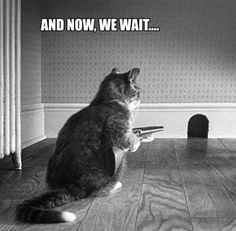 Funny Cat Quotes Black and White Photography
