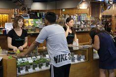 East Longmeadow becomes latest Massachusetts town to ban recreational marijuana cultivation and sales - MassLive.com