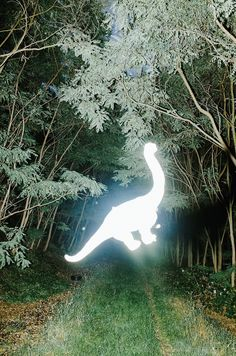 A lack of logic illuminates the surreal stills of Max Slobodda's 'Stranger Things' series. Beneath a veil of mystique, the Dortmund-based photographer leaves no trace. Stranger Things Max, Forest Fairy, Magazine Art, Light And Shadow, Three Dimensional, Exist, Crazy Stupid, Beast Boy, Cryptozoology