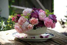 roses : duchesse de montebello, hermosa, queen of denmark, cardinal de richelieu, reine des violettes, félicia et sibelius  + alchemille mollis