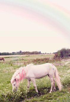 Magical Pink Horse