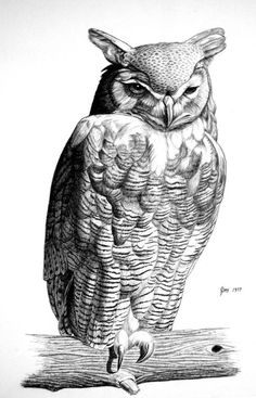 Horned Owl  Pencil rendering 16x20 inches  Limited edition of 140 prints  $20 each