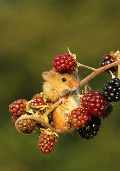 I need me a berry