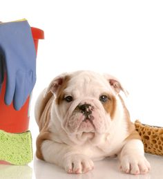 Green Cleaning Can Make Your Pet Sick!!! Find Out More Here!
