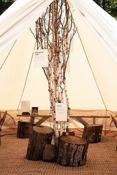 sweet set up  tree, bark, branches, Shelter Co.