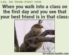 LOL SO TRUE POSTS - Funniest relatable posts on Tumblr. Gif