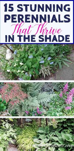 Looking for perennial ground cover plants that will thrive in your shade garden? This list of easy to grow flowering perennials is perfect for shady landscaping. Dwarf Plants, Tall Plants, Hardy Plants, Outdoor Plants, Outdoor Gardens, Part Shade Perennials, Flowers Perennials, Ground Orchids, Shade Loving Shrubs