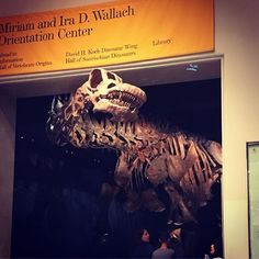 A couple of days ago we decided to ride out the heat wave inside the American Museum of Natural History - wanted to go for ages at least since first reading Relic for the first someday back in the 90s... #americanmuseumofnaturalhistorynyc #travelblogrepeat #NYC #centralpark #dinosaur #heatwave July 06 2018 at 12:49AM