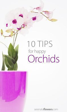 A popular flower associated with perfection, love, beauty, luxury, fertility and children, orchids are a popular plant choice for the home. Here is how to take care of them.