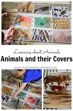 Ideas for exploring animal patterns and camouflage with where the animals live in the different biomes.