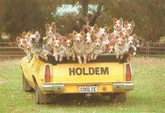 Back of the Holden Ute - Where else but Australia.