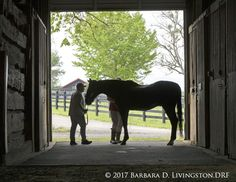 His look was powerful, his name intimidating, his record extraordinary, his trainer legendary.  He ran Lasix-free, and his name is part of racing lore for literally taking a bite out of the IRS.