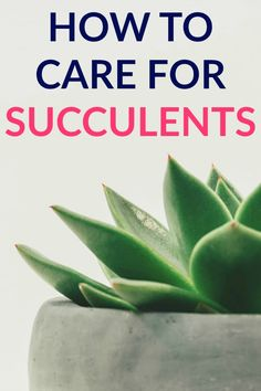 I confess I've killed some plants in my lifetime, but not succulents. Here is my guide to How To Care for Succulents for the Reformed Plant Killer. Time Management Tools, Diy Generator, Propagating Succulents, Succulent Care, Succulent Plants, Increase Productivity, Décor Boho, Propagation, Cool Plants