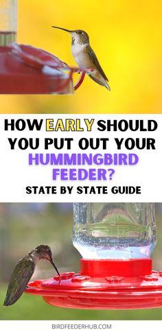 Make Hummingbird Food, Hummingbird House, Hummingbird Nectar, Hummingbird Plants, Sugar Water For Hummingbirds, How To Attract Hummingbirds, Attracting Hummingbirds, Hummingbird Migration, Humming Bird Feeders