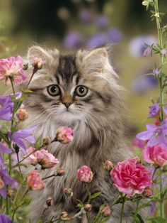 Gorgeous kitten photo