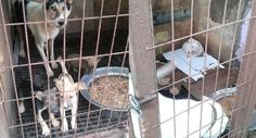 "Petition · Shut down the illegal ""Hellhole"" dog slaughterhouse in Gwangmyeong, South Korea! · Change.org"