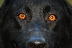 dog eyes - Google Search