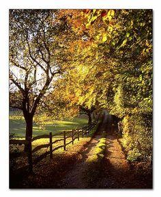 autumnal lane in Hampshire