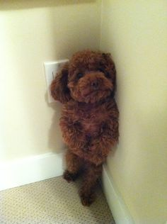 dog or teddy bear?