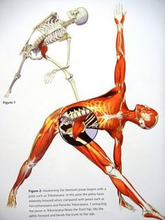 Psoas muscle and back pain