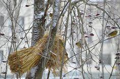 http://www.pienilintu.blogspot.fi/2014/12/on-niin-kaunista.html