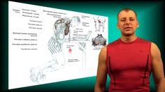 статодинамика программа тренировок для женщин для похудения
