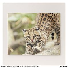 Puzzle. Photo Ocelot. Jigsaw Puzzle