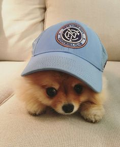 Puppies and hats