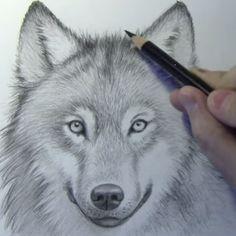 Bekijk het filmpje: Hoe teken je een Wolf?. Leuke filmpjes, artikelen en lijstjes. Even niks te doen? Superleuk.nl!