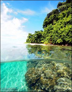 Healthy coral reefs start at the surface by Restorf Island, Kimbe Bay. Photo by Christopher Bartlett