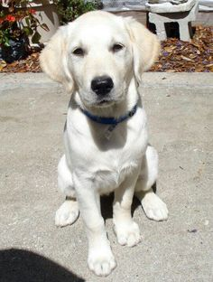 A guide dog for the blind...bless you