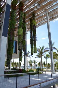 Hanging plants outside the PAMM