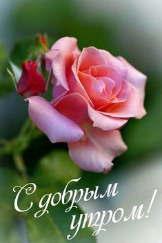 Good Morning Roses, Good Morning Coffee, Clever Quotes, Love Rose, Blue Flowers, Beautiful Flowers, Photo Wall, Happy, Tuesday