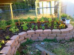 raised bed along fence - half the height