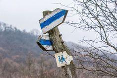 #winter #hungary #vértes #photooftheday #mik #instadaily #iphotography #nikon #d7100 #forest #trees #trail #bluetrail #kéktúra