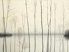 """Plants by the water """"As thin and dainty as electrical wires..."""""""