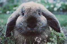 bunny by pearled, via Flickr