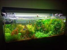Rainbowfish Aquascape