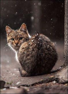 Catz - Katzen