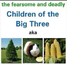 PJO/HoO jokes, headcanons, and other things: Pt. 3 - Children of the Big Three - Wattpad