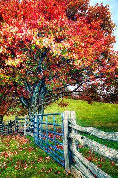 Blue Ridge - Fall Colors - NC