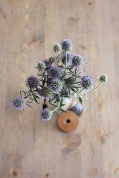 deco-plantes-sechees-09